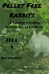 Pellet Free Rabbits~ How You can Raise superior meat and sublime fertilizer for minimal money!
