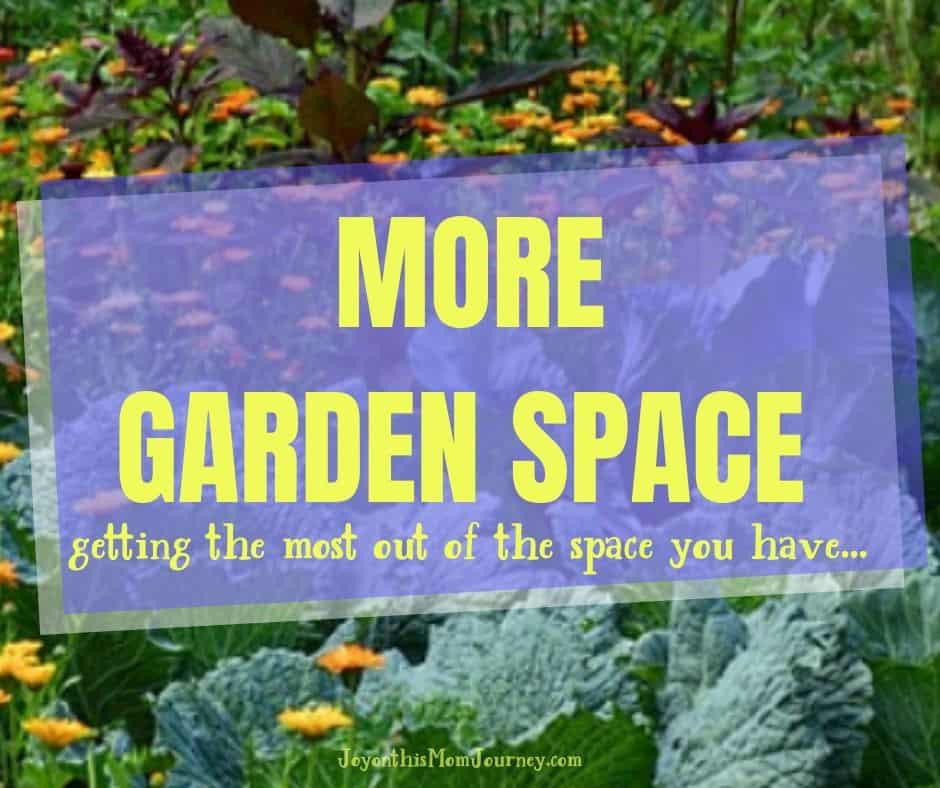 getting more out of your garden space with companion planting and succession planting