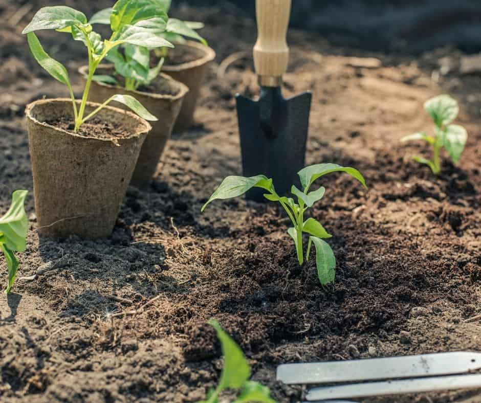 When to plant what vegetables- The best time to plant your garden