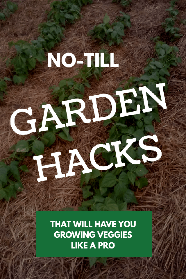 Easy no- till garden methods that will give you magnificent results