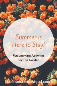 Fun Summer learning activities in the garden