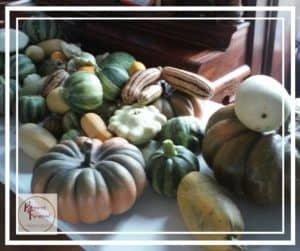 newly harvested winter squash