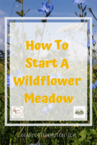 Wildflowers are beautiful and grow in the humblest of ground. I would love to have acres of them! #wildflowermeadow #bestgardenever