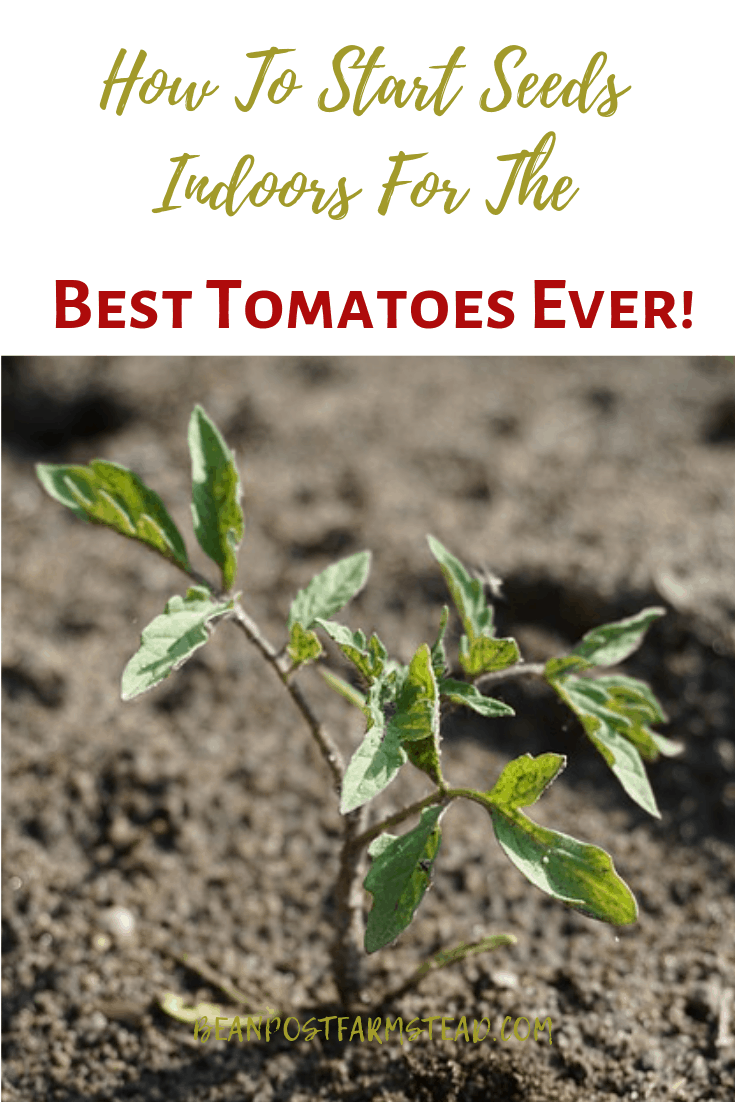 Why would you want to start your tomatoes from seed when you can buy them already started? The varieties are endless when you start your own plants from seed, and with that comes tremendous flavor! This guide takes all the guesswork out of the process of starting your own tomato seeds indoors!