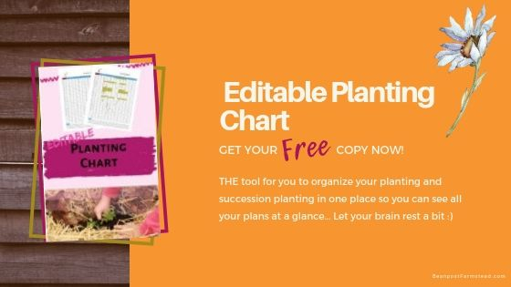 board wall with orange block linking to a garden planting printables bundle