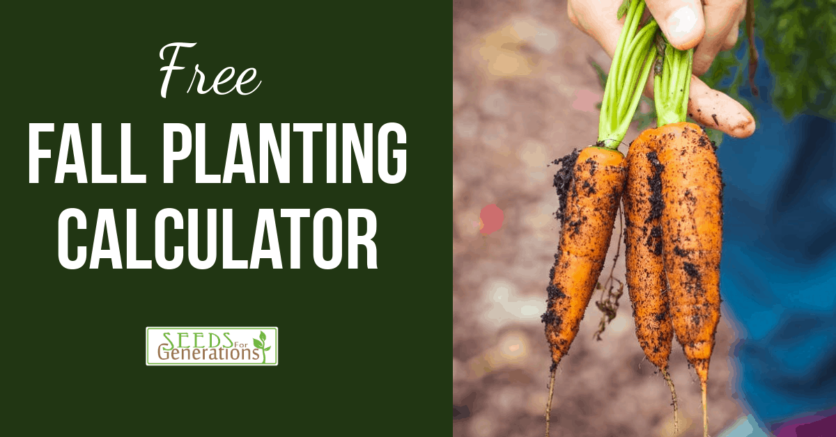 fall vegetables, fall gardening, fall planting calculator, #seedforgenerations fall gardening, when to plant what in your fall garden